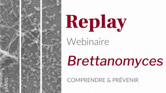 Replay Webinaire – Brettanomyces, comprendre et prévenir
